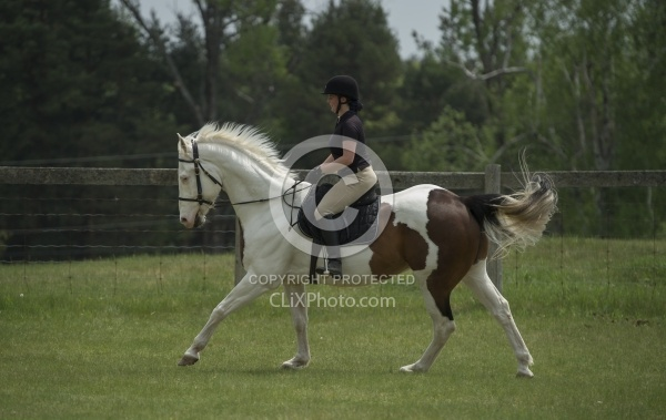 Paint Schooling English Canter