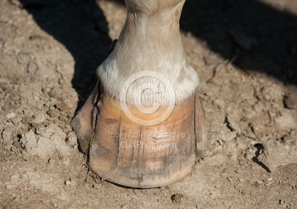 Hoof Cracks