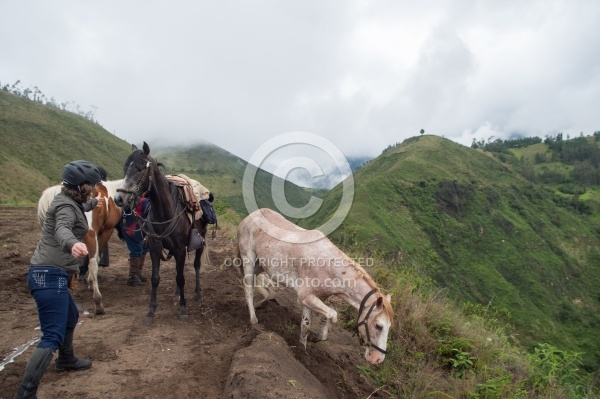 Sending Horses Downhill on High Andes Ride