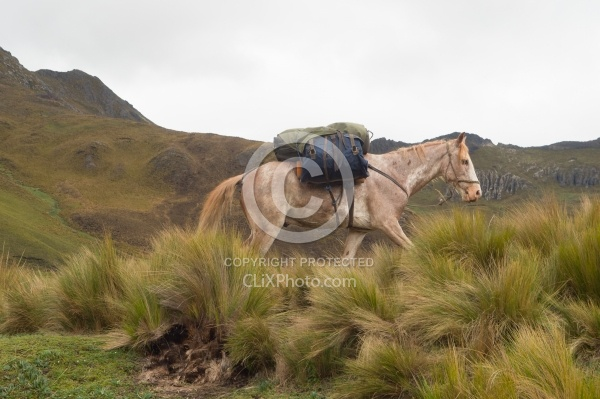 Chuggo in the Paramo in the High Andes