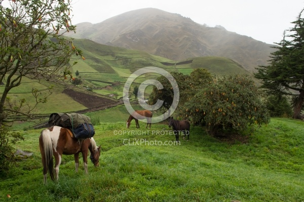 Morning at Angels farm in the high Andes, Ecuador