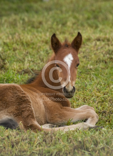 Foal at Hacienda La Alegria Foal lying down