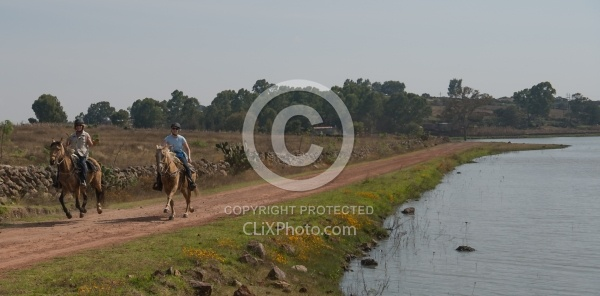 Galloping on the Trail