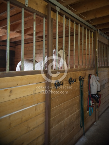Stall with Horse